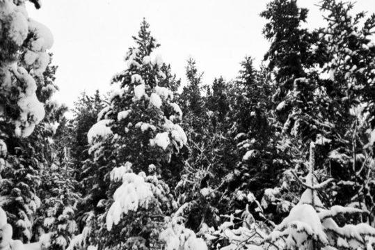 Canciones para el invierno